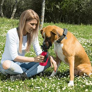 Doggy Bottle, ingredienti, composizione, come si usa, funziona